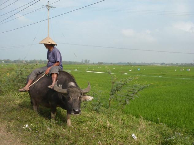 photo-man-riding-buffalo