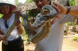 Photo of Mekong Python